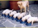 Manuka Honing UMF 15+; wondverzorging & aanvulling op (rauwe) voeding van honden en katten _