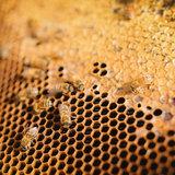 bijen op honingraat, the Honey Collection Nieuw Zeeland